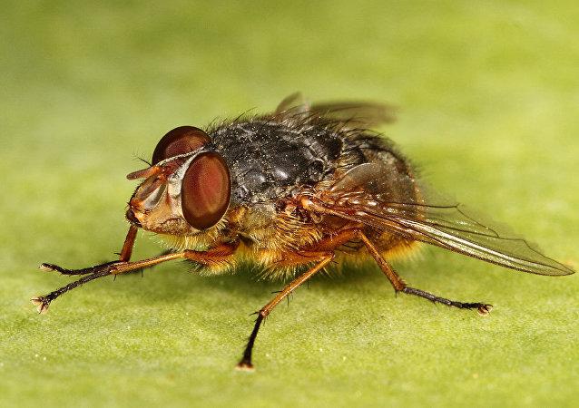 科學家揭示蒼蠅為何可怕