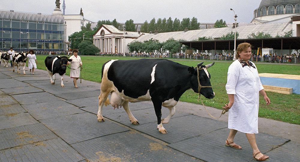 中國與俄濱海邊疆區企業將聯合成立俄最大畜牧業綜合體