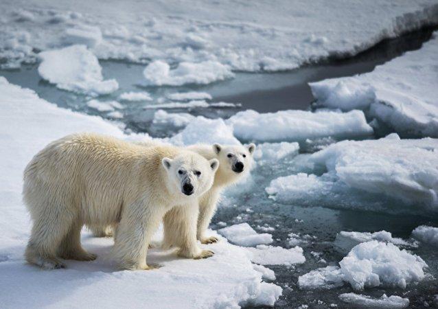 氣候改變和人們的行為致北極熊入侵新地