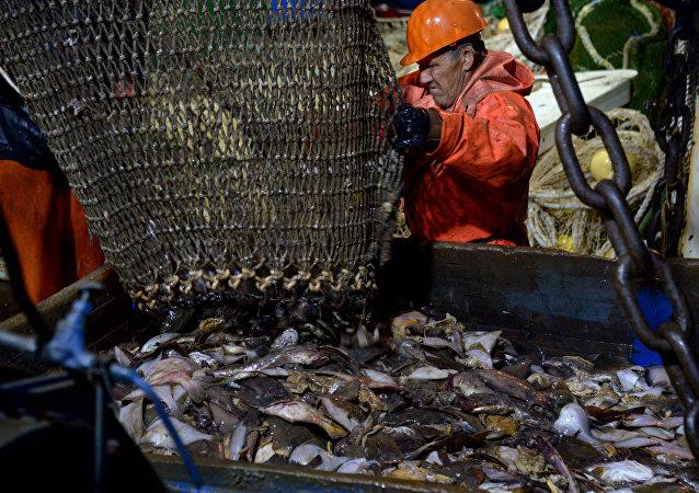 俄联邦渔业署:俄罗斯将继续与中国就恢复供应俄鱼类产品展开磋商