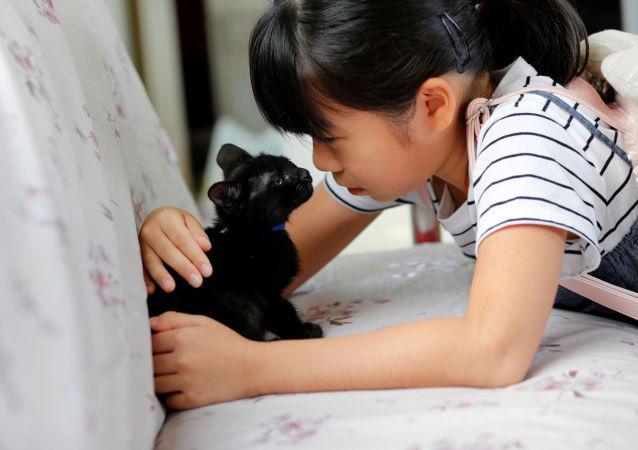 香港线上宠物保险公司OneDegree融资2800万美元