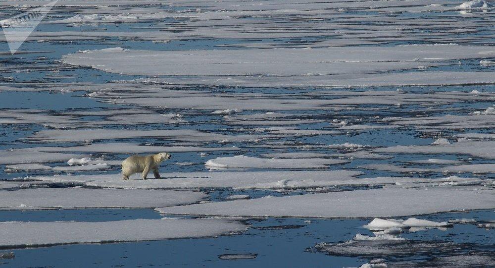 世界自然基金会:最近几十年北极的气候变化非常明显