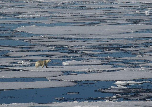 世界自然基金會:最近幾十年北極的氣候變化非常明顯