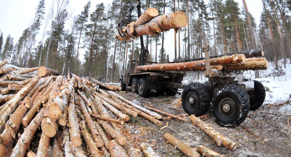 俄中两国投资人计划在远东建工业园从事木材深加工