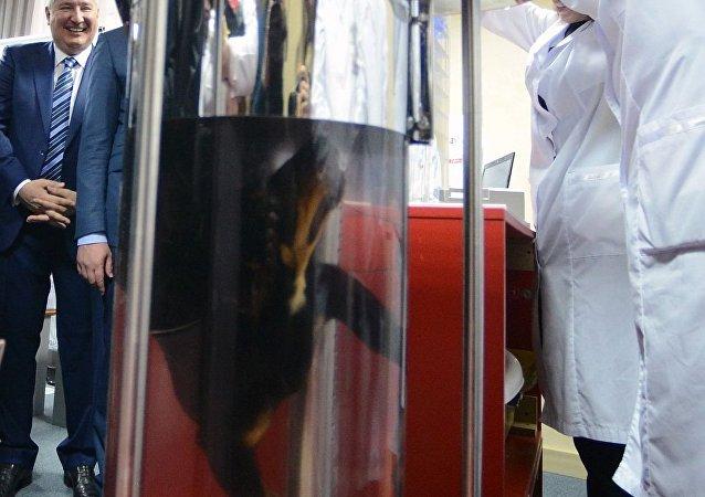 科学家向罗戈津展示俄罗斯的液体呼吸技术