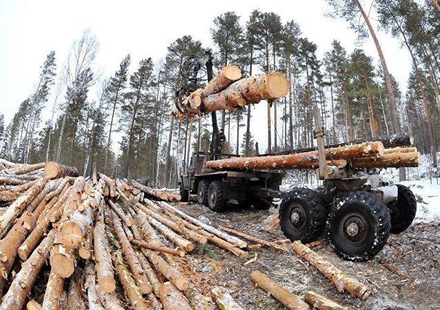 綠色和平組織評估俄非法採伐規模