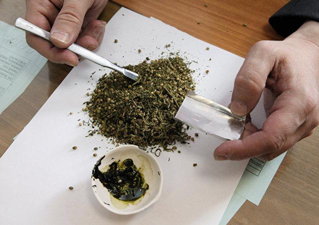 俄罗斯远东警方从当地居民处缴获23公斤大麻