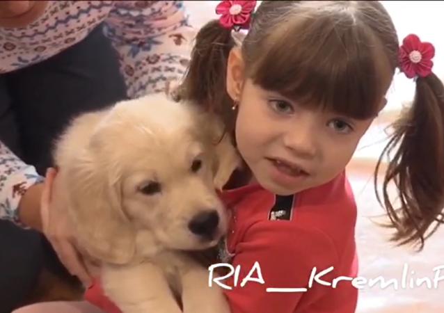 普京满足俄远东自闭女孩新年愿望赠其金毛幼犬