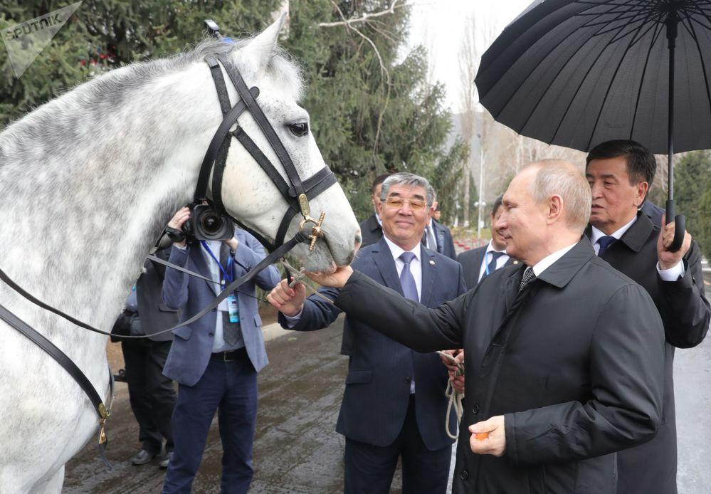 俄罗斯总统普京与吉尔吉斯斯坦总统热恩别科夫在比什凯克赠送的奥尔洛夫快步马