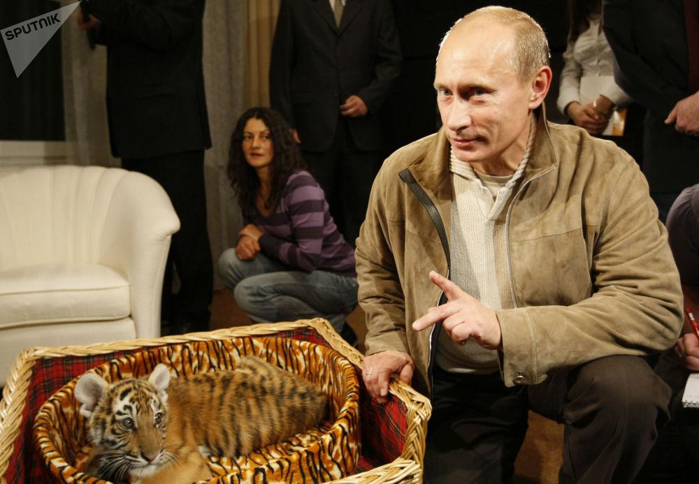 普京向记者介绍他获赠的虎崽