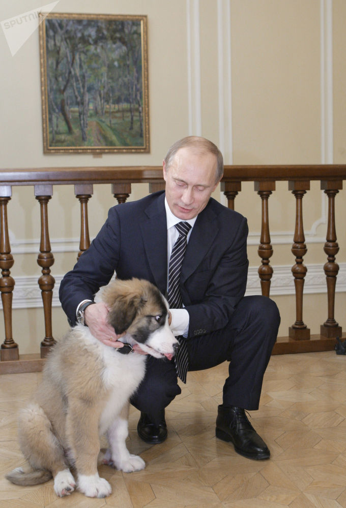 """俄罗斯总统普京与保加利亚总理鲍里索夫赠送的保加利亚牧羊犬""""巴菲"""""""