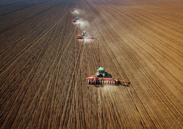 俄羅斯農業