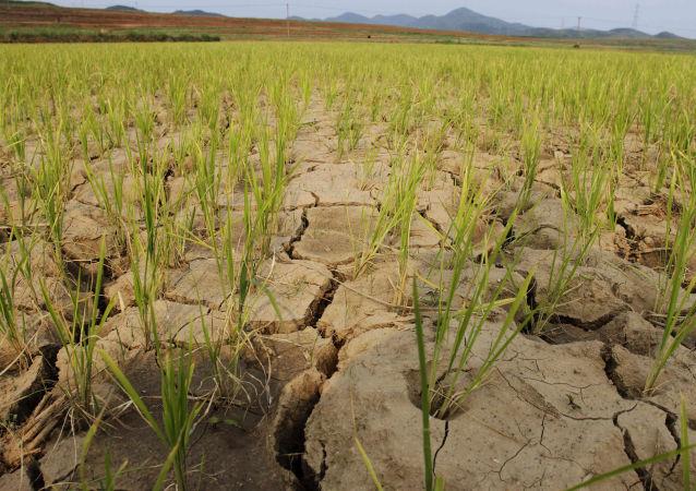俄外交部:俄罗斯在朝鲜干旱背景下将继续为其提供人道主义援助