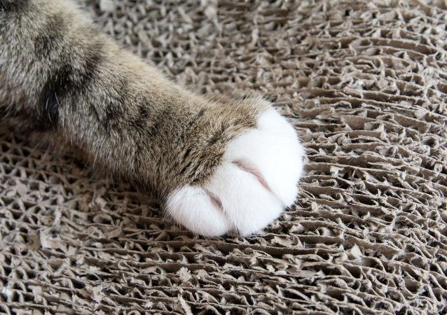 一隻重達16公斤的貓驚現美國