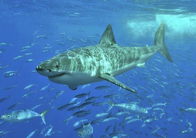 一名女大学生在巴哈马遭遇三条鲨鱼袭击后死亡