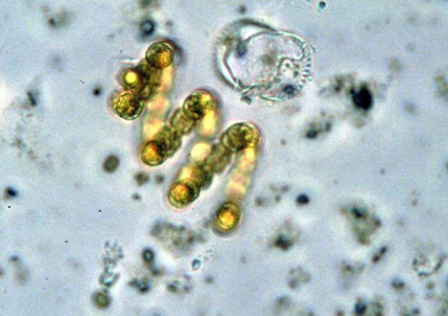 專家告訴你家中哪裡細菌最多