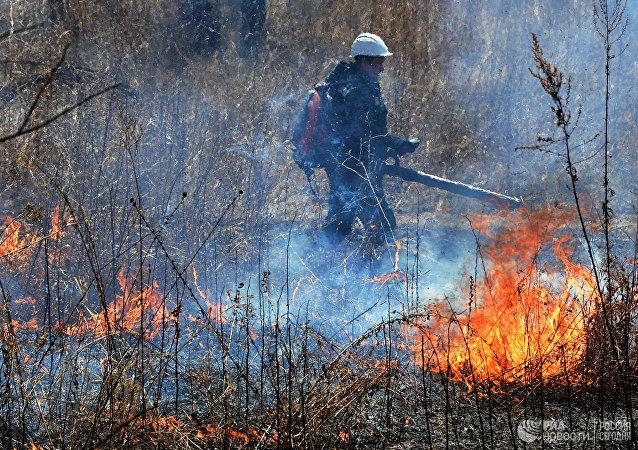 俄森林消防部门一昼夜扑灭105处自然火灾