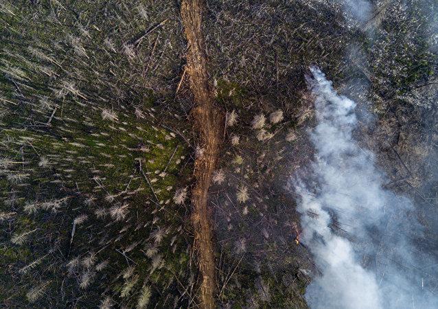 俄森林消防部门一天扑灭114处森林火灾
