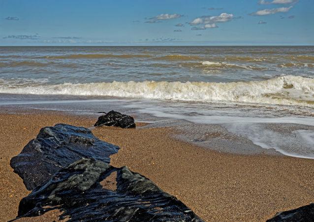 一只外星水母被冲上澳大利亚海滩
