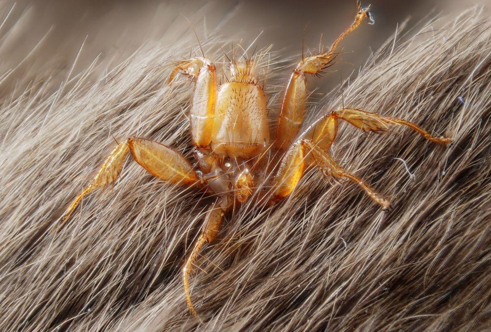 蛇头毛毛虫和吃蝙蝠的蜘蛛: 自然界可怕的例子