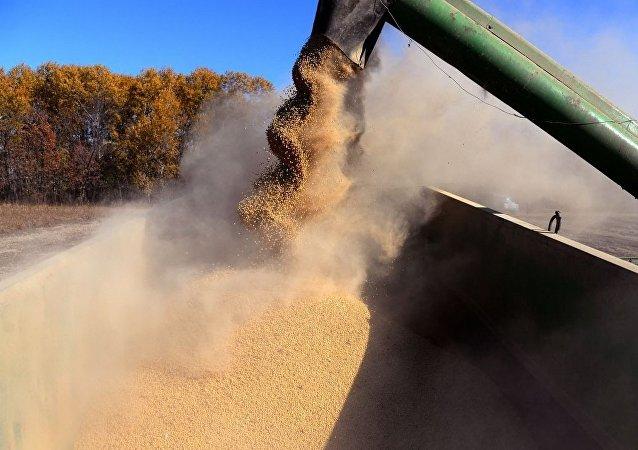 俄罗斯将在6月30日前征收大豆出口关税