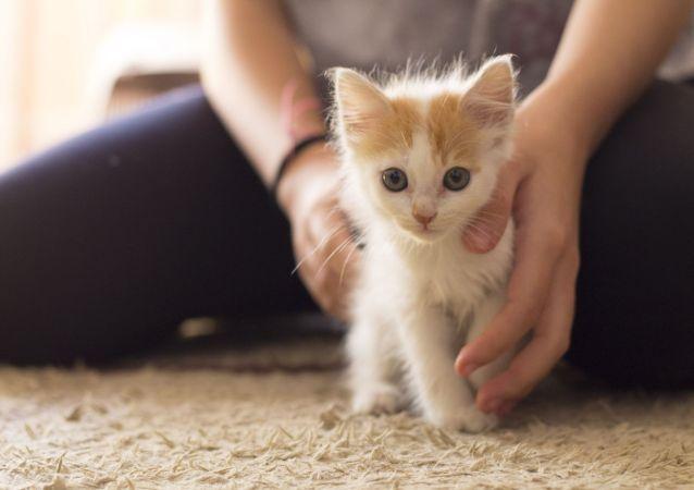 寵物能幫助人更好度過隔離期