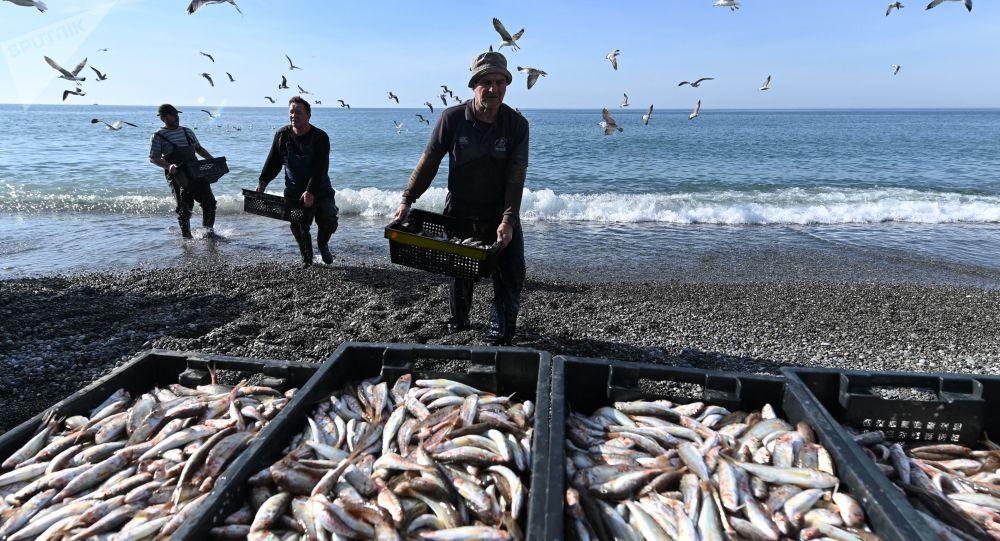 俄羅斯5月份經琿春對華出口魚類產品同比增長6倍