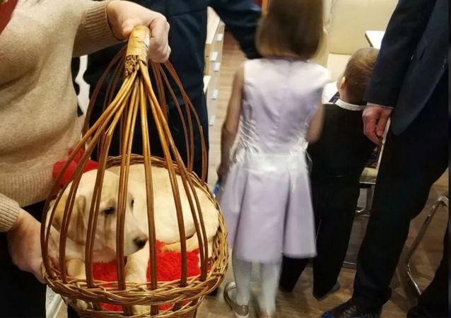 卡卢加州女孩收到普京送的幼犬