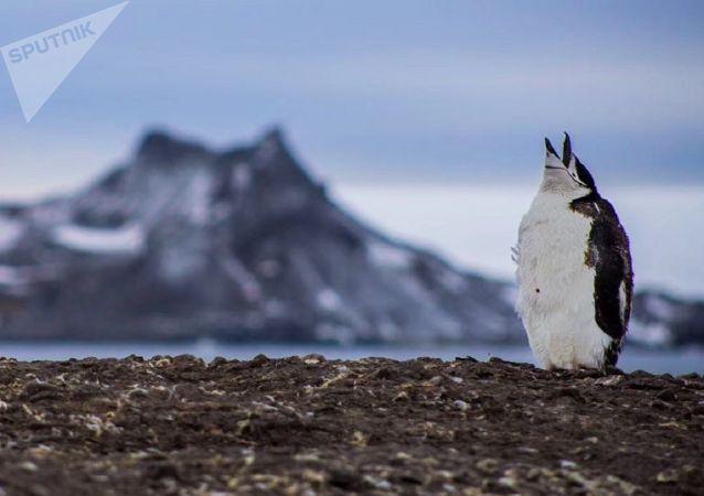 专家谈气候变化对企鹅的危害