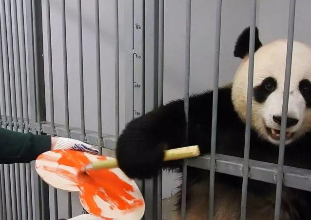 莫斯科人可参加线上竞赛并赢得熊猫的情人节贺卡