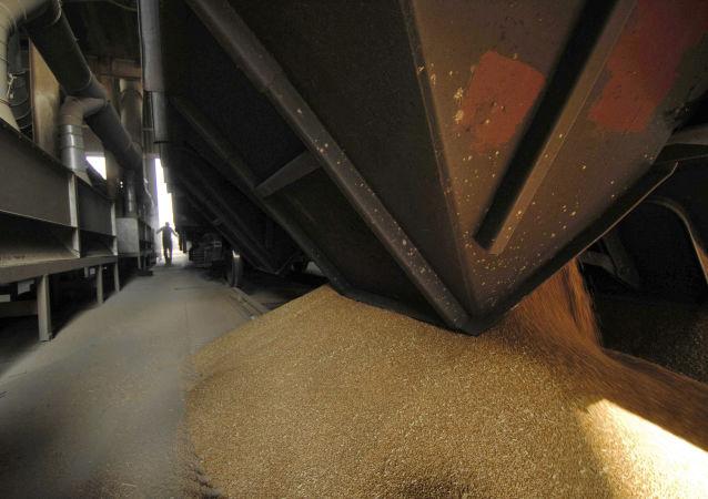 俄农产品出口中心:2030年前俄对华农产品出口额可增加30亿美元