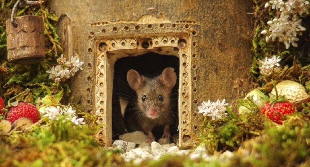 研究报告:中国科学家成功让公鼠怀孕并顺利产崽