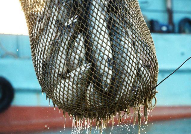 南美四國要求緊急停止在加拉帕戈斯群島非法捕撈