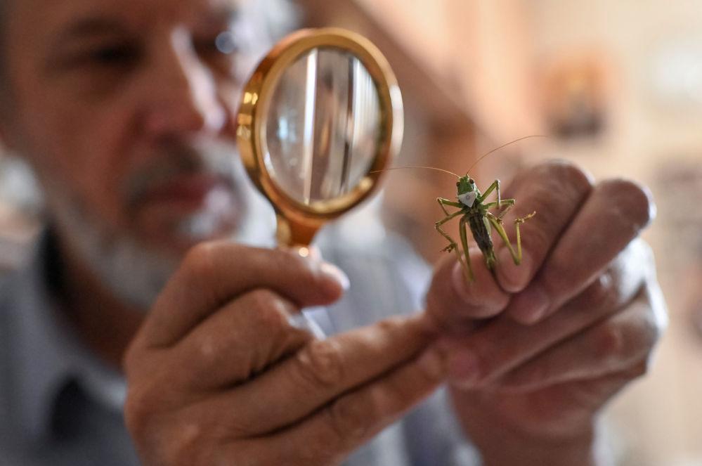 昆虫艺术品