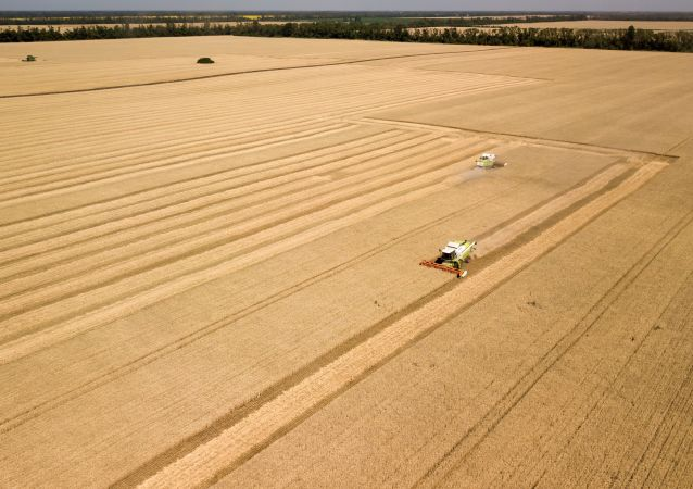 彭博社承認俄羅斯在全球小麥市場的主導地位